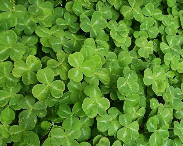 17.03.20 St. Patrick's Day